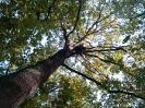 Leśna przygoda z Watahą -2