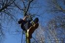 Zajęcia ze wspinaczki drzewnej - 27 marca 2017